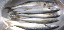 Fiskerestauranter