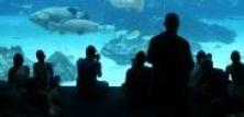 Akvarier og terrarier