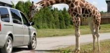 Safariparker