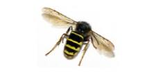Hvepse, bier og myrer