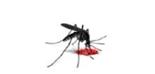 Myg og stankelben