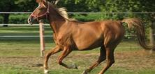 Hesteracer: T - Å