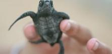 Skildpadder som kæledyr