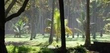 Verdens natur